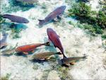 海洋生物普查:约百万种,3/4未知